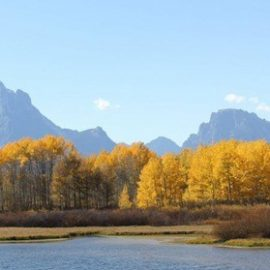 Fall Color Tours Grand Teton for one to four people